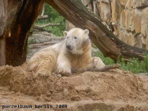 Photo: Knut macht es sich wieder gemuetlich ;-)