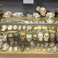 SkullStore Oddity Shop