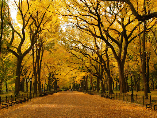 12 amazing places to visit in Central Park