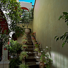 Stair and flowers by Cristobal Garciaferro Rubio - Buildings & Architecture Architectural Detail ( stair, stairs, leaves, flowers, flower )