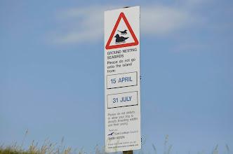 Photo: Ground nesting seabirds- Eider
