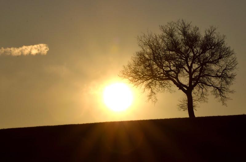 Re Sole di s_ornella