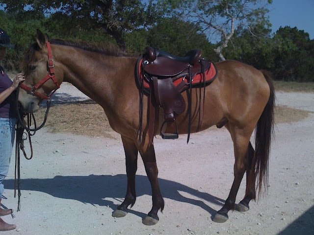 Does this saddle make my butt look big? - HorseCentric
