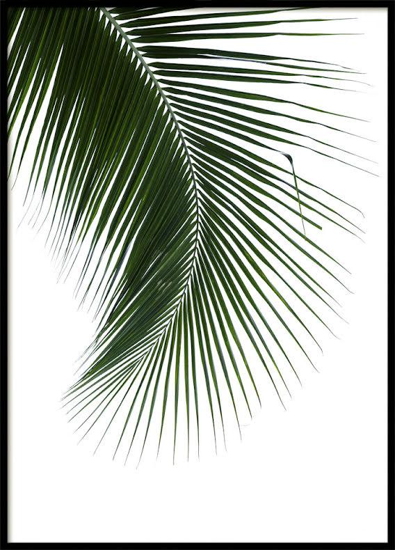 Palm Leaf, Poster