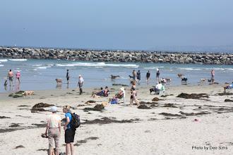 Photo: (Year 3) Day 32 - Dog Beach