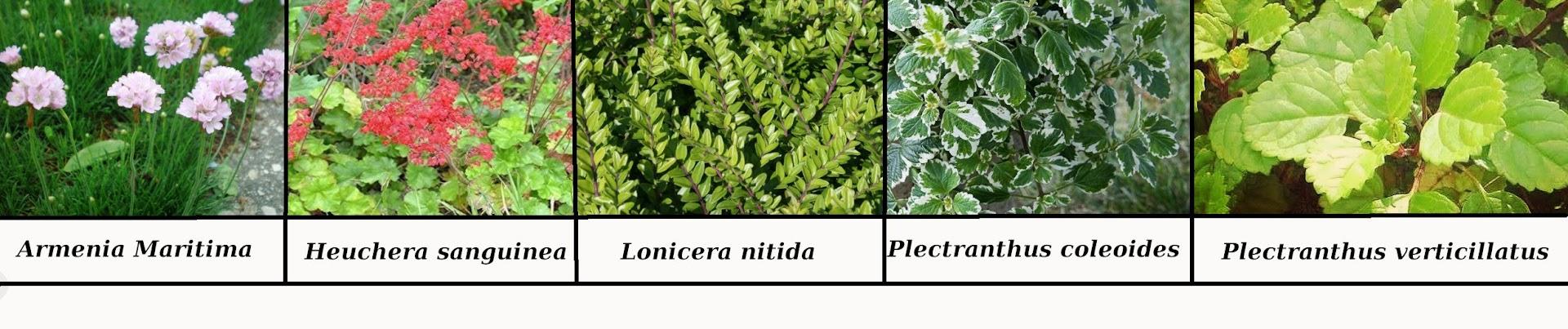Especies instaladas en los jardines verticales