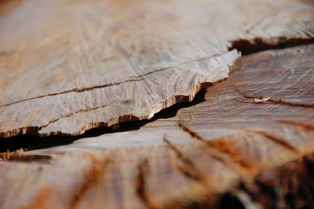 La gola nel legno