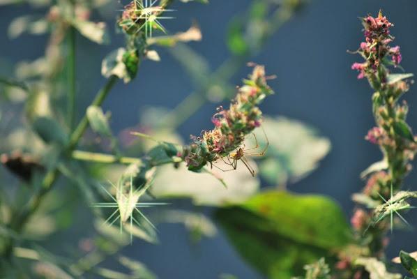 Flowers spider di Nicholas Falchetto