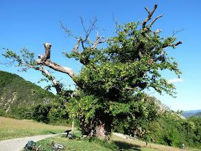 Photo: auprès de mon arbre, chantait Brassens