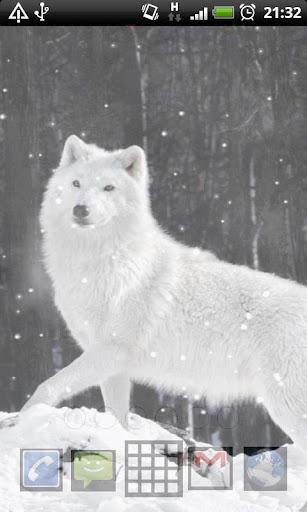 玩免費個人化APP|下載Lwp 北極オオカミ app不用錢|硬是要APP