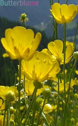 Wild Flowers in German p2