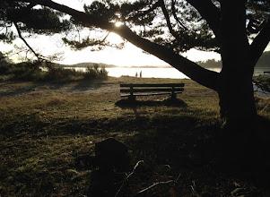 Photo: Neujahrsspaziergang in Mandal, Furulunden, am 01.01.16. Strahlender Sonnenschein und kein Schnee.