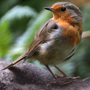 robin low.jpg