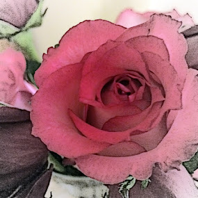 My Rose by Tammy Pressley - Flowers Flower Arangements ( rose, arrangement, plants, roses, gardens, bloom, beauty,  )
