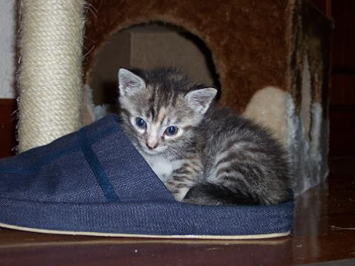 nuestros peludos y sus lugares o the cat in the box. 101_2759