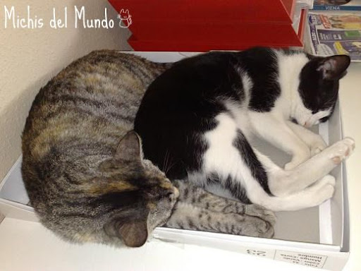 nuestros peludos y sus lugares o the cat in the box. 23072009881