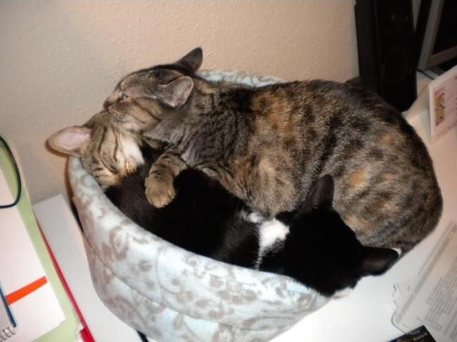 nuestros peludos y sus lugares o the cat in the box. DSCN3616
