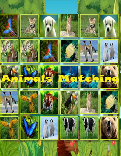 少年のための動物のマッチング
