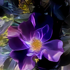 PURPLE ROSE by Cassy 67 - Digital Art Things ( digital, love, harmony, flowers, abstract art, abstract, creative, flower, digital art, modern, light, rose, style, roses, energy )