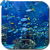 Aquarium 4K Video Wallpaper