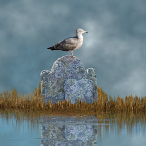 Marshland Gravestone With Seagull Reflection by Robin Amaral - Digital Art Things ( grasses, artography, water, bird, reflection, seagull, moody, marsh, clouds and mist, gravestone, lichen, imaginative,  )