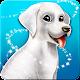 Labrador Puppies Family
