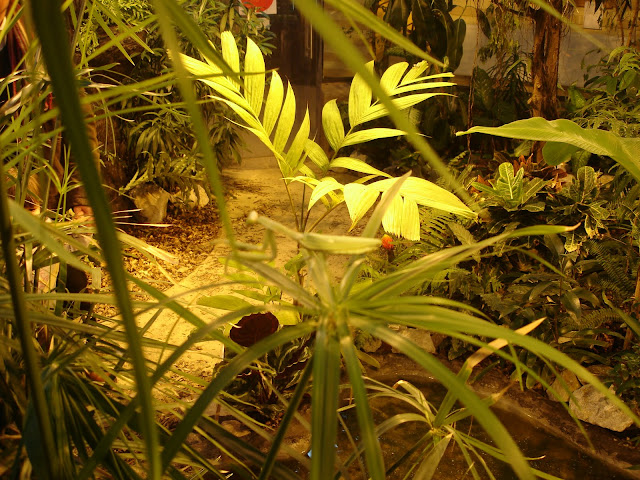 Modliszka i rośliny