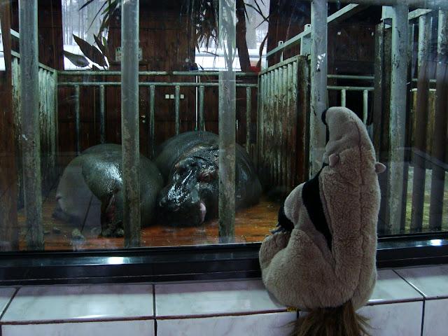 Mrówkojad i hipopotmy