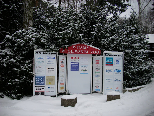 Oliwa wita śniegiem