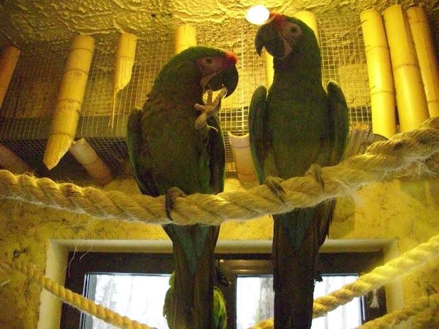 Ary zielonoskrzydłe
