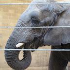 Zoo Providence (USA)