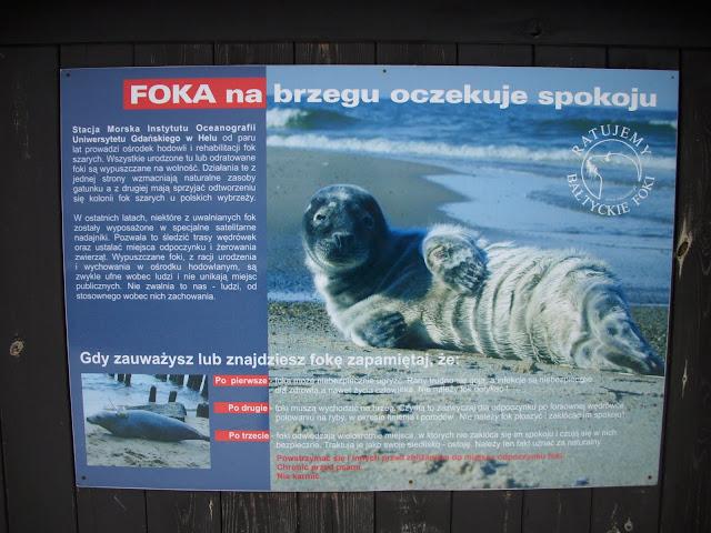 Co zrobić, gdy na plaży spotkamy fokę?