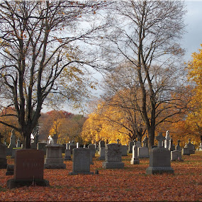 Rest in peace by Janice Burnett - City,  Street & Park  Cemeteries ( peaceful, graves, autumn, cemetery, grave stones, golden )