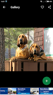 Bloodhound Wallpapers HD - náhled