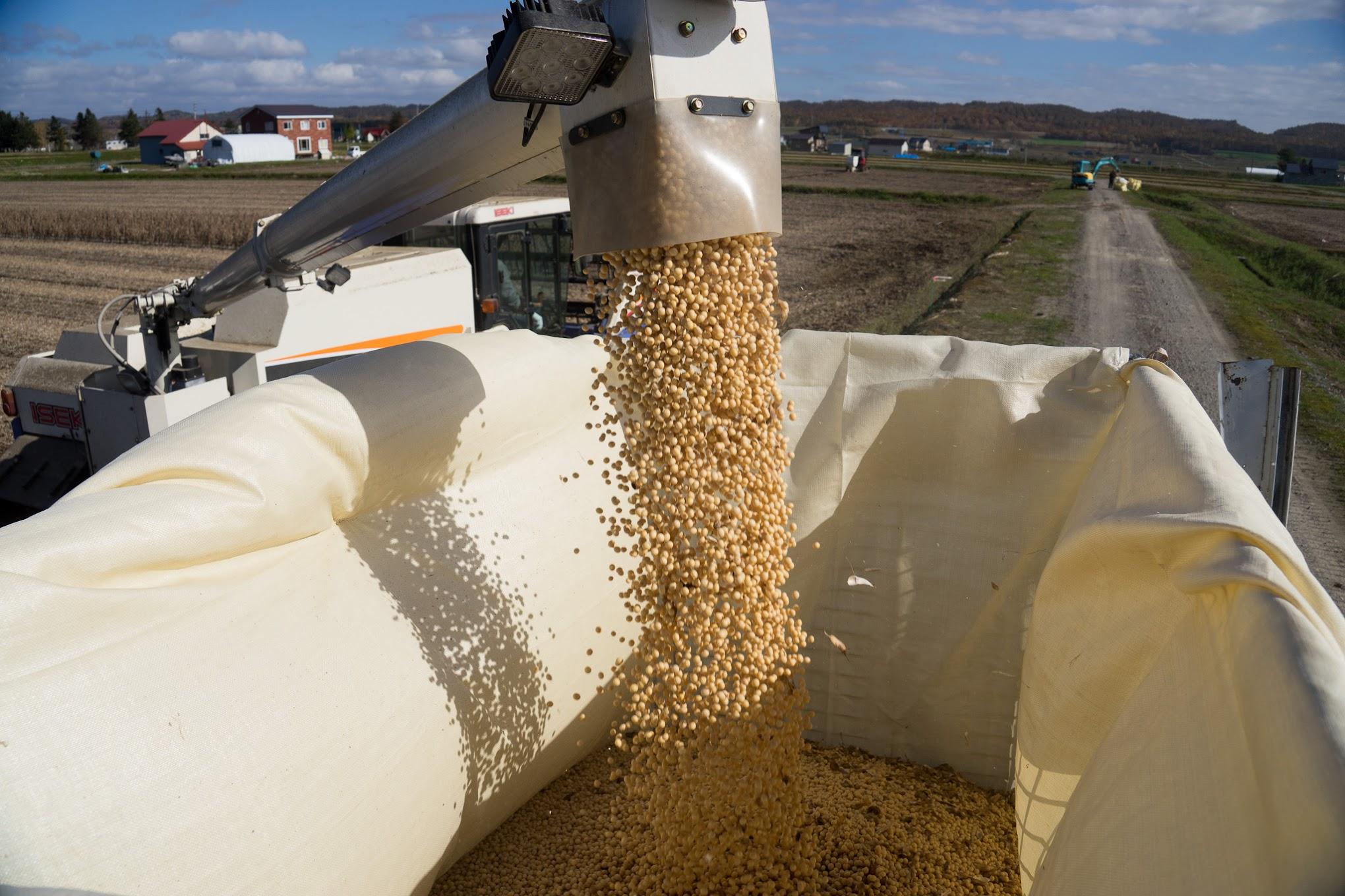 コンバインから運搬車に積み込まれる大豆