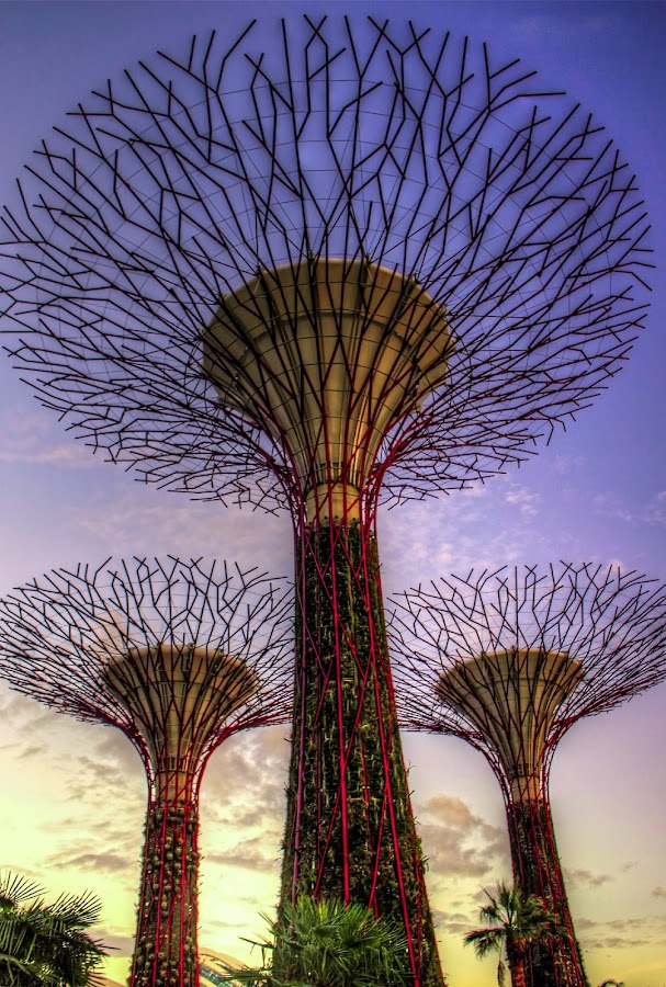Singapore, Gardens by the Bay by Charles Ong - City,  Street & Park  City Parks ( , hdr, landmark, travel )