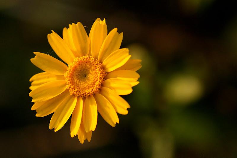 Pequena flor.. gosto do amarelo