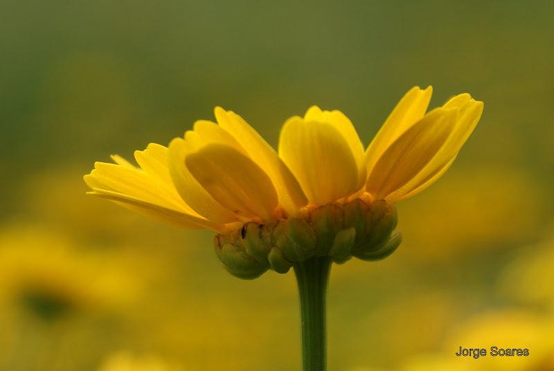 Flor, Primavera em Setúbal