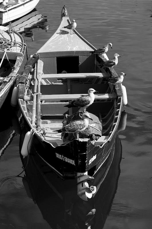 Deus é grande .... as gaivotas também acham