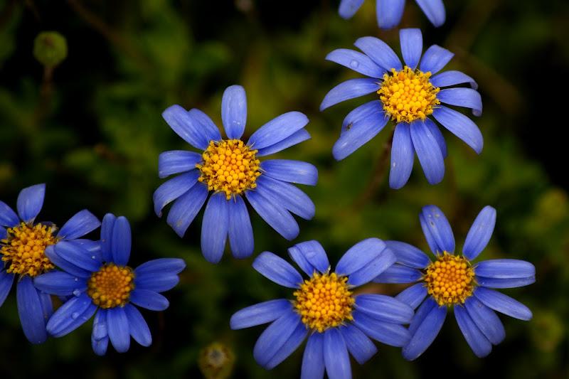 Para poetizar uma flor