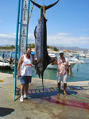 Cabo San Lucas Activities - Fishing
