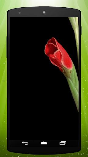 Blooming Flower Live Wallpaper