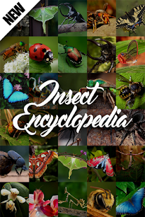 Insect Encyclopedia - náhled