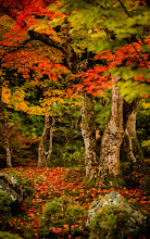 """Photo: This photo appeared in an article on my blog on Mar 18, 2013. この写真は3月18日ブログの記事に載りました。 """"More Japanese-Garden Desktop Backgrounds from Kyoto's Enkoji Temple"""" http://regex.info/blog/2013-03-18/2226"""