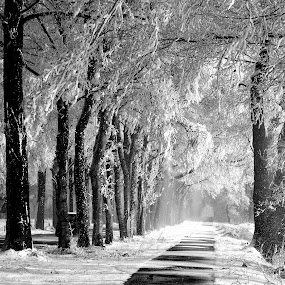 Snowy lane. by Gert de Vos - Black & White Landscapes