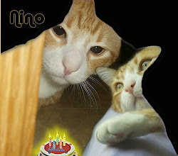 Photo: Nino-2009