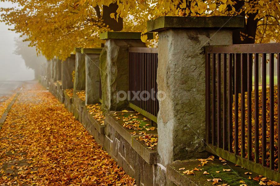 Autumn by Miroslav Socha - City,  Street & Park  Street Scenes ( fall leaves on ground, nature, autumn, folliage, abscission, fall, leaves )
