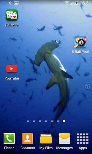 Sharks SHAKE and Change LWP