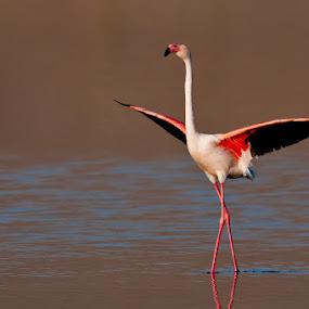 by Gorazd Golob - Animals Birds
