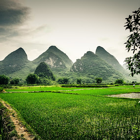 Green Guilin, China by Erika Fisher - Landscapes Travel ( mountains, guilin china, rice paddy, landscapes, travel photography )